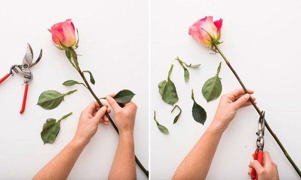 cach cam hoa hong khong kho nhung doi hoi nguoi cam dieu gi 1 - Cách cắm hoa hồng không khó nhưng đòi hỏi người cắm điều gì?